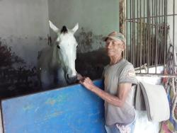 File Vincent Campbell, a groom at Caymanas Park, in the stable with a racehorse in his care.